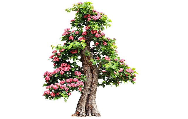 Drzewa goździkowe