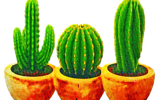 Kaktusowice